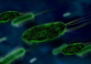 Bacteria in the workplace