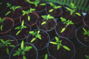 Simple Ways Schools Can Go Green